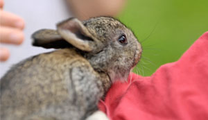 Make sure rabbits are happy bunnies this Easter, say vets