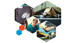 BSAVA launches rolling 'stepped' CPD programme