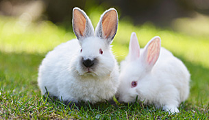 BSAVA endorses Rabbit Awareness Week and offers support to practices