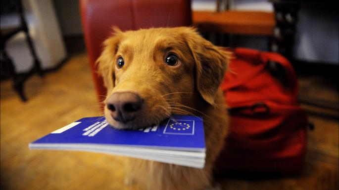 Brexit & Pet Travel: BSAVA Survey of Companion Animal Official Veterinarians (OVs)