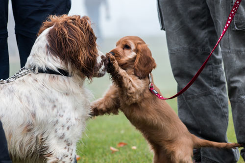 Study reveals powerful long-term impact of DNA tests on dog diseases
