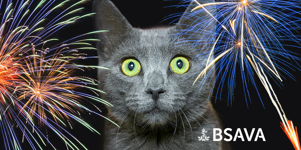 BSAVA offers advice on fireworks and pets