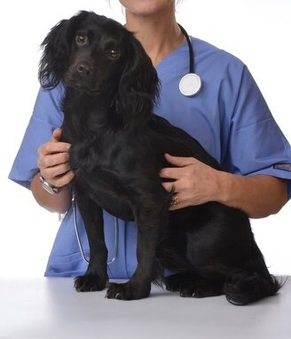 New study links low cholesterol to mortality in canine and feline patients