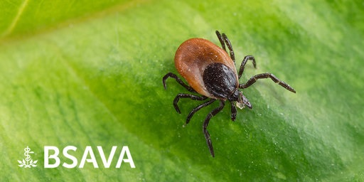 BSAVA provides Q&A advice regarding babesiosis