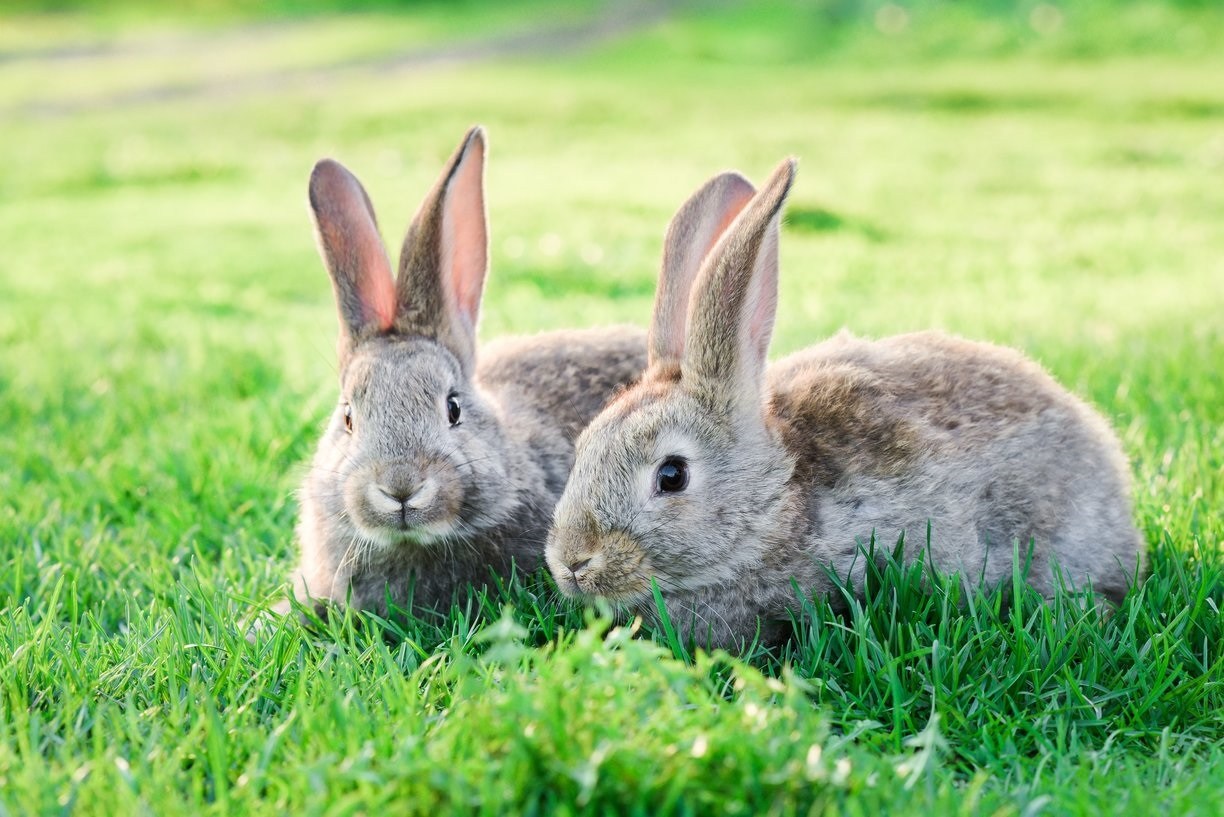 A discussion about pet rabbit health and welfare – part one, Luisa Dormer