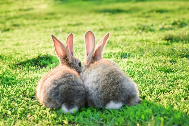 A discussion about pet rabbit health and welfare – part two, Luisa Dormer