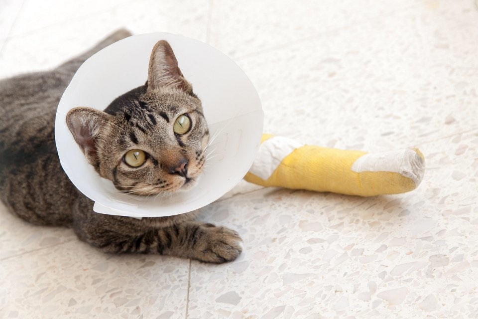 BSAVA PetSavers announces new joint-funding for Clinical Research Projects