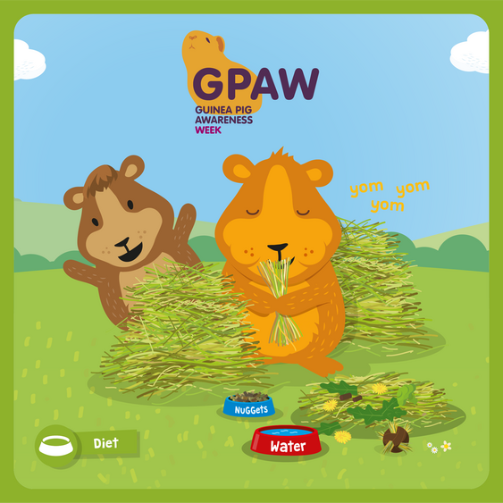 Vets show their support for the first ever Guinea Pig Awareness Week (GPAW)