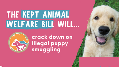 Government launches second Animal Welfare Bill to protect pets, livestock and wild animals