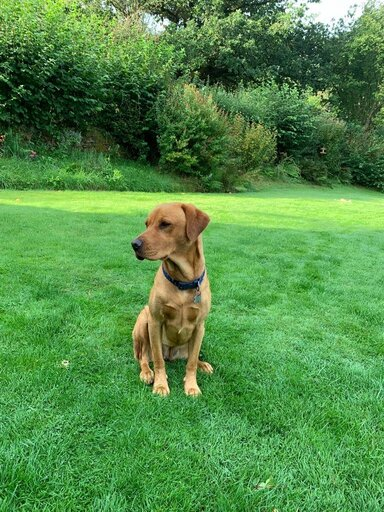 Study offers insight into canine hepatobiliary disease in UK dogs